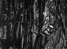 Bambous de GENEVIEVE GOSSOT3_12