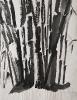 Bambous de GENEVIEVE GOSSOT4_14