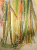 Bambous de GENEVIEVE GOSSOT_14