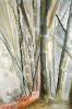 Bambous de GENEVIEVE GOSSOT_35